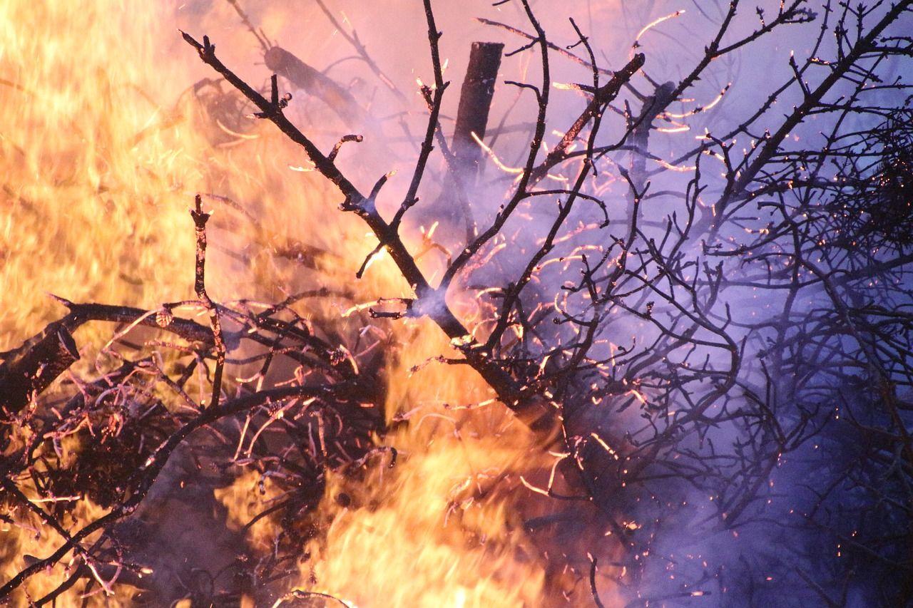 Brennende Äste im Wald